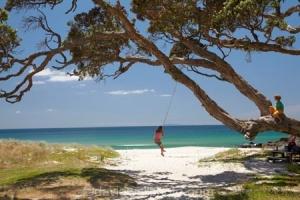 Young Girl on Rope Swing under Pohutukawa Tree, Whangapoua Beach, Coromandel, North Island, New Zealand